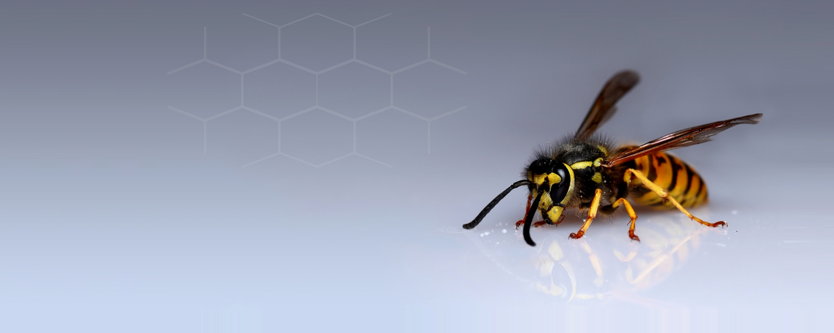 Guaranteed wasp services company in Essex, Hertfordshire and London