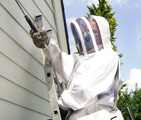 Wasp nest removal services in Harpenden